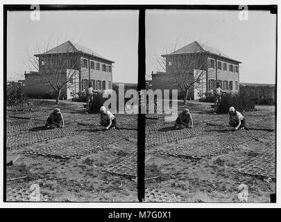 Zionist colonies on Sharon. Borochov. Girls' farm, potting plants. LOC matpc.02673 - Stock Photo