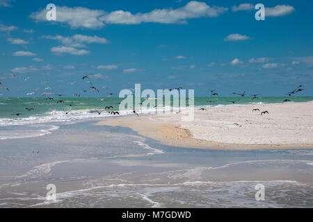 Sand beach with flying birds on the southern tip of Egmont Key State Park in the Gulf of Mexico on the west coast - Stock Photo