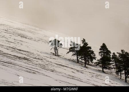 stark pine trees against snow mountain and fog, black and white landscape, scottish glen, glen rinnes, march. - Stock Photo