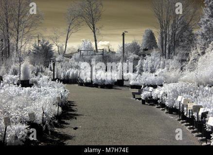 Infrared image of nursery walkway in Seattle - Stock Photo