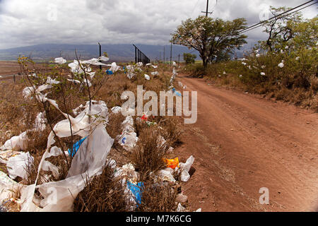 Scrubs and trees filled with plastic bags, down wind from a landfill site on the island of Maui, Hawaii.  A state - Stock Photo