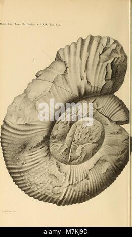 Atti della Società toscana di scienze naturali, residente in Pisa (20161892949) - Stock Photo