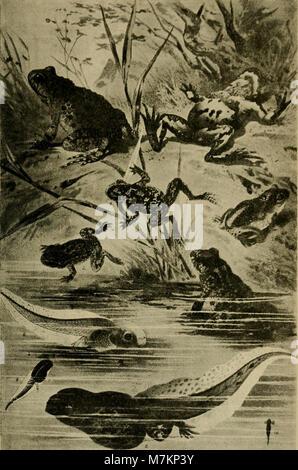 Blätter für Aquarien- und Terrarien-Kunde (1895) (20392702671) - Stock Photo