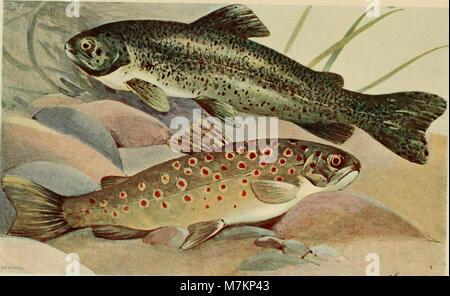 Blätter für Aquarien- und Terrarien-Kunde (1901) (20199802869) - Stock Photo