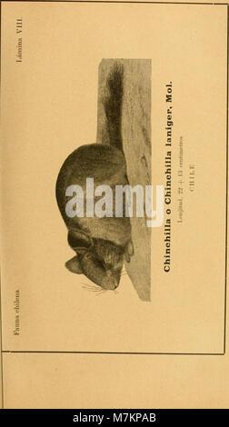 Boletín del Museo Nacional de Chile (1911) (20201245718) - Stock Photo