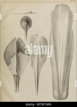 Abhandlungen der Königlich Bayerischen Akademie der Wissenschaften (16558093287) - Stock Photo