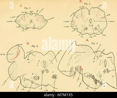 Abhandlungen der Königlich Preussischen Akademie der Wissenschaften (1911) (16559685557) - Stock Photo