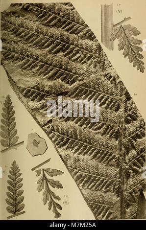 Abhandlungen zur geologischen Specialkarte von Preussen und den Thüringischen Staaten (1893) (16561276587) - Stock Photo