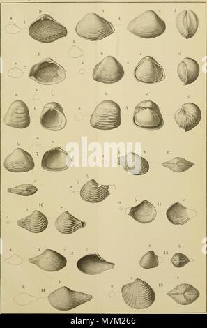 Abhandlungen zur geologischen Specialkarte von Preussen und den Thüringischen Staaten (1893) (16582893289) - Stock Photo