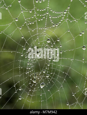 Spiderweb covered in dew droplets early in the morning. Tipperary, Ireland - Stock Photo