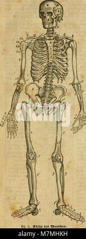 Analytischer Leitfaden für den ersten wissenschaftlichen Unterricht in der Naturgeschichte (1858) (17982194030) - Stock Photo