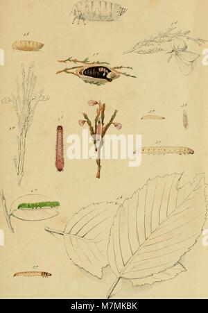 Annales de la Société entomologique belge (1861) (18204807451) - Stock Photo