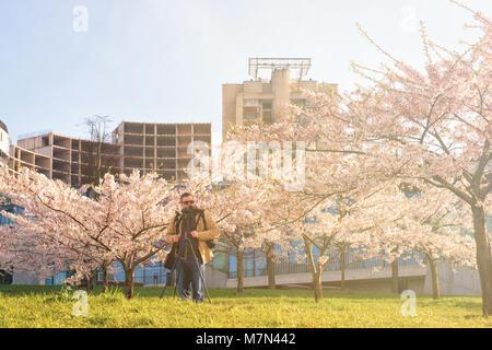 Man taking photos of Sakura or cherry tree flowers blossom garden in spring, Vilnius, Lithuania - Stock Photo