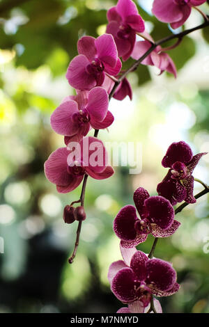 New York, USA. 11th Mar, 2018. Photo taken on March 11, 2018, shows a view of the Orchid Show 2018 at the New York - Stock Photo