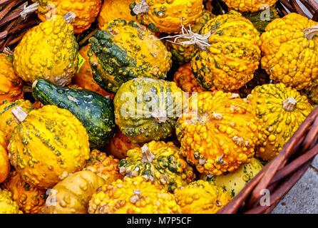 Yellow and golden little ornamental pumpkins in wicker basket - Stock Photo