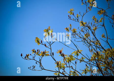 Horizontal photo depicting a macro spring view of the tree branch on the blue sky background - Stock Photo