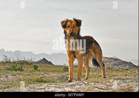 Stray dog Khayelitsha, Cape Town,South Africa. - Stock Photo