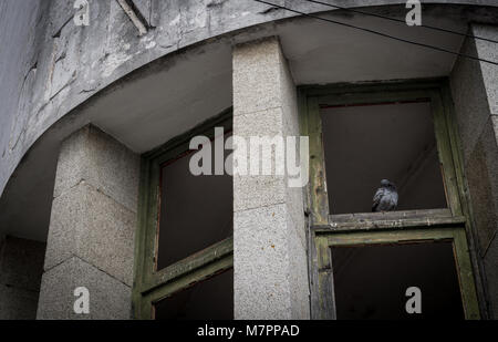 pigeon in the window of an abandoned building, evora, portugal - Stock Photo