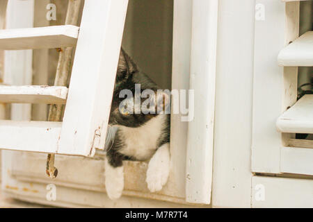Cute little cat looking trough a window shutter - Stock Photo