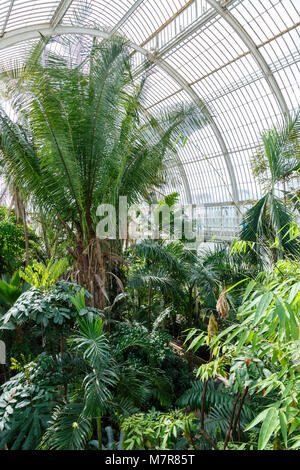 London, UK - April 18, 2014. Interior of the Palm House at Kew Gardens. The gardens were founded in 1840 and are - Stock Photo