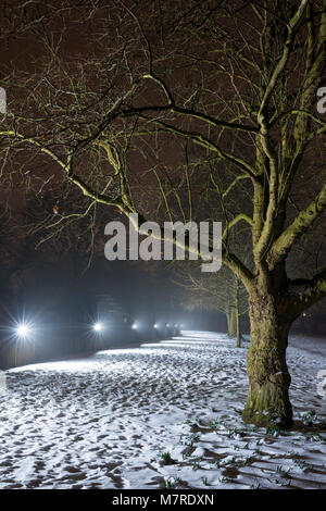 Winter trees along broad walk in the snow early morning before dawn. Merton college, Oxford, Oxfordshire, England - Stock Photo