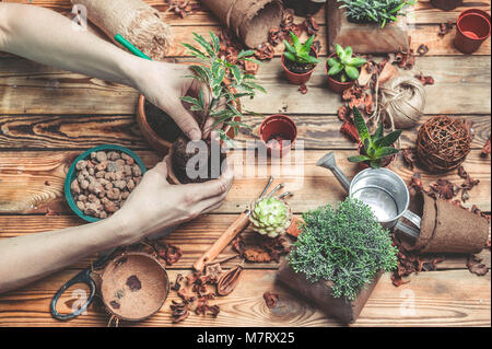 The florist behind work. Hands of the florist replace a plant in a new pot. Succulents and cactuses on a wooden table