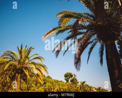 Amazing sunset on palm coast in the subtropics. Beautiful date palms trees in Barcelona. Awesome sky, vintage retro - Stock Photo