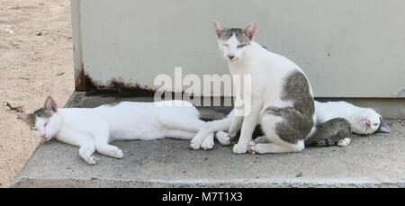 Homeless cats on concrete bench - Stock Photo