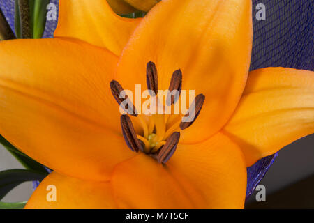Orange Lily flower, blossom lily beautiful bouquet - Stock Photo