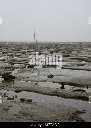 Salt marshes at Bradwell on Sea, Essex. This conservation area is a site of special scientific interest on the UK - Stock Photo