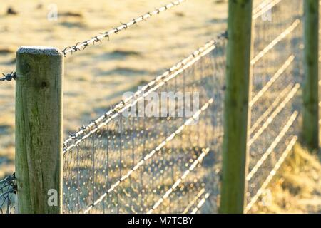 Frosty barbed wire fence glints in morning sun - Stock Photo