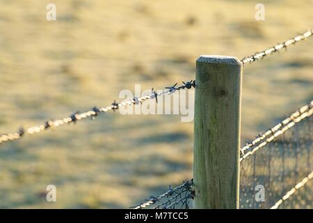 Barbed wire fence with wooden fence post - Stock Photo