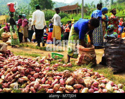 Freshly picked sweet potatoes sold in a local market in north western Rwanda. - Stock Photo