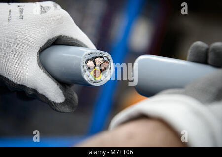08 March 2018, Germany, Stuttgart-Vaihingen: An employee of the cable producer Lapp shows a severed cable. Lapp - Stock Photo