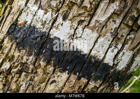 Close up of Tree Bark Marked with paint - Stock Photo