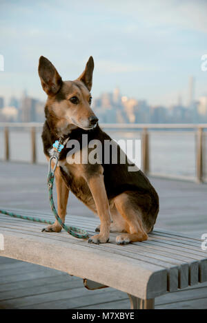 Justa a Salty Dog on a Bench in Williamsburg - Stock Photo