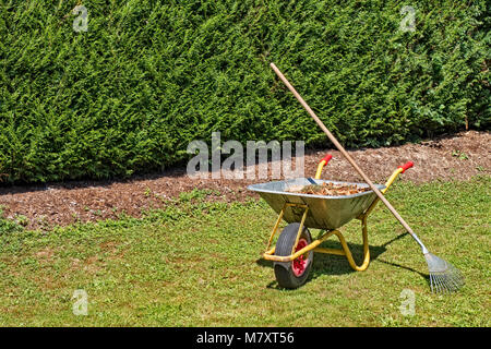 Wheelbarrow filled with plant waste standing on grass in private garden - Stock Photo