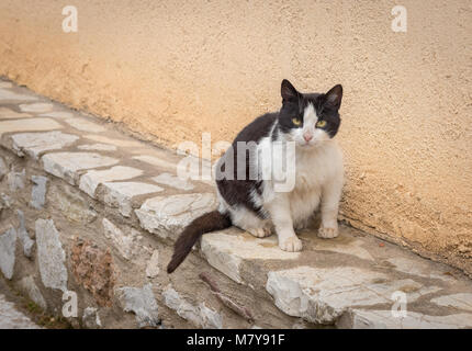 Black and white stray fatty cat sitting by the wall and looking us - Stock Photo