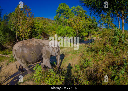 Outdoor view of huge Elephants walking after a taking a refreshing bath with mud in Jungle Sanctuary, Elephant spa, - Stock Photo