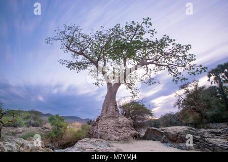 Baobab tree on edge of Epupa Falls - Stock Photo