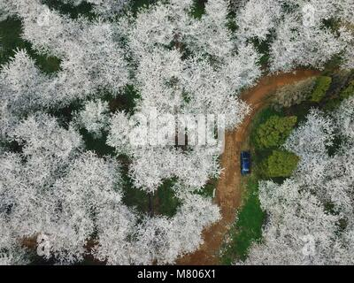 (180314) -- GUIYANG, March 14, 2018 (Xinhua) -- This aerial photo taken on March 14, 2018 shows cherry blossoms - Stock Photo