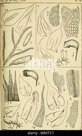 Bulletin de la Société royale de botanique de Belgique (1890) (20249672329) - Stock Photo