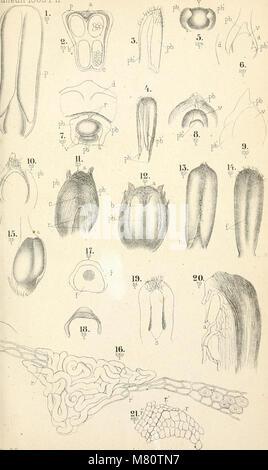 Bulletin de la Socit impriale des naturalistes de Moscou (1829-1917) (20245903340) - Stock Photo