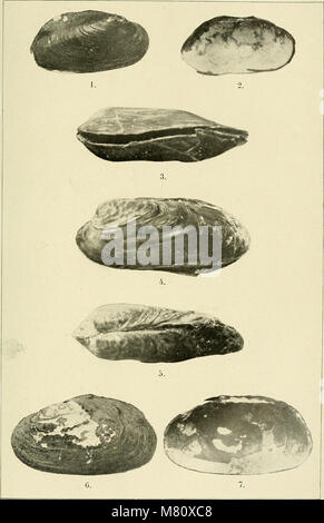 Bulletin du Muséum national d'histoire naturelle (1911) (14781656304) Stock Photo