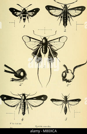 Bulletin du Muséum national d'histoire naturelle (1911) (14784022365) Stock Photo