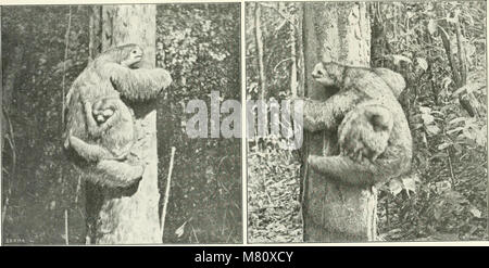 Bulletin du Musum national d'histoire naturelle ((1895-1970)) (19817752554) - Stock Photo
