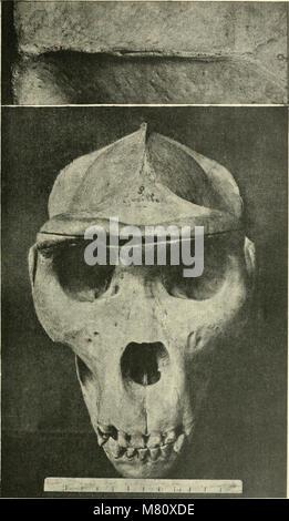 Bulletin du Musum national d'histoire naturelle ((1895-1970)) (20446517261) - Stock Photo