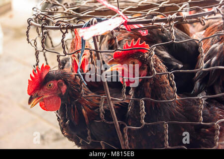 Chickens for sale at the indoor market in Hoi An, Vietnam - Stock Photo