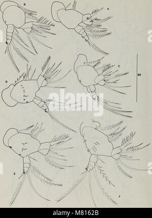 Bulletin of the Natural History Museum Zoology (1996) (20468534886) - Stock Photo