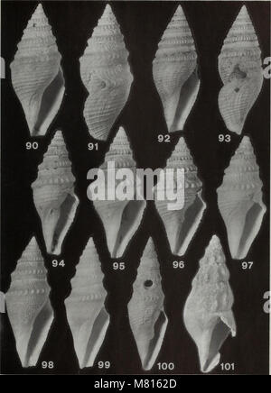 Bulletin of the Natural History Museum Zoology (1996) (20485913372) - Stock Photo